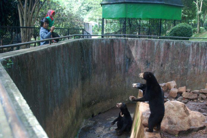 แม่ลูกหมีหมาสามชีวิต