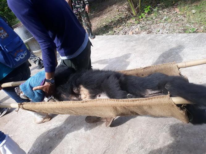 แม่ลูกหมีหมา