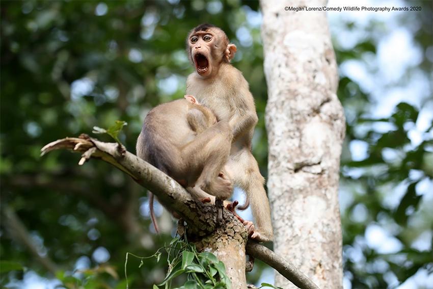 รางวัลภาพถ่ายสัตว์ป่าสุดฮา