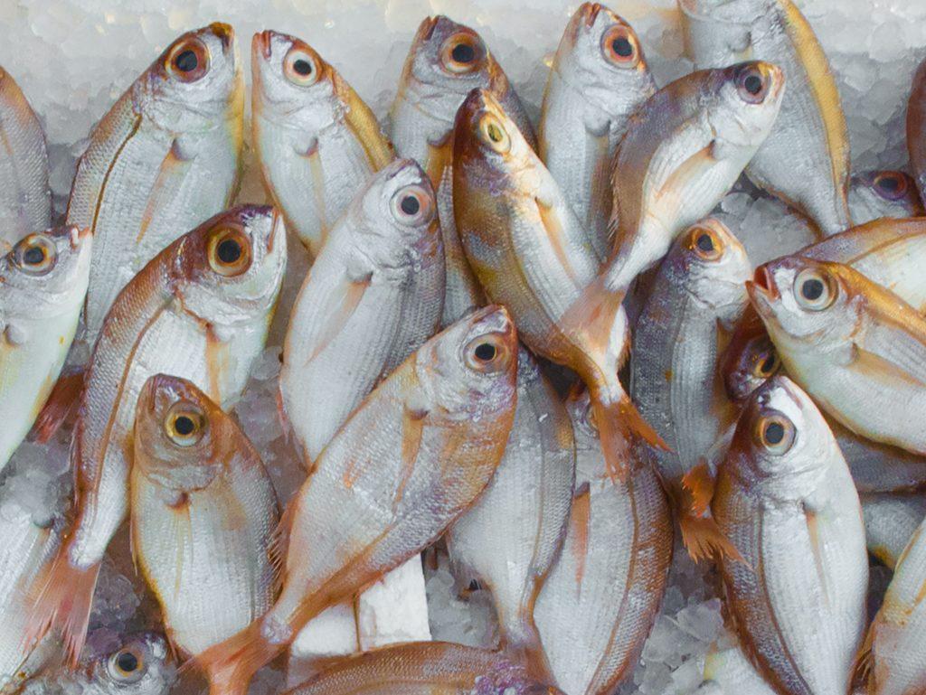 โรค covid ไม่แพร่ระบาดผ่านอาหารทะเล ข้อมูลออกมาจากสสส.